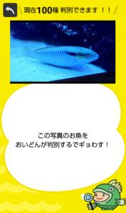 フィッシュ1−11
