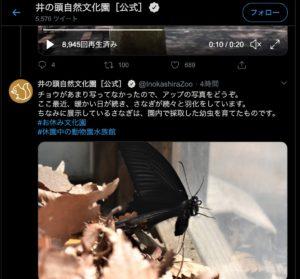Twitter 井の頭 蝶々