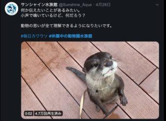 家でも動物に癒される!?Twitterで動物園・水族館をみてみる